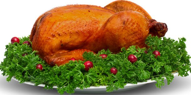 turkey bird food for flat tummy