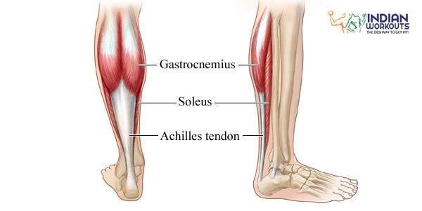 calf-muscles-work