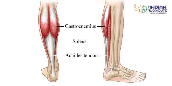 calf-muscles-work