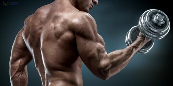 arm-triceps